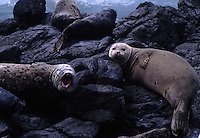 Sea lions sprawl across an offshore outcropping, one among thousands of exposed Pacific reefs, rocks, islands, and pinnacles joined into BLM's California Coastal National Monument. The shoreline is known as the &quot;Lost Coast&quot; in Kings Range National Conservation Area.