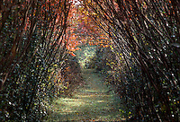 Fall Color, Tunnel of Trees