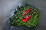 Leaves on lichen covered rock in stream.   Mossman Gorge, Daintree National Park, Queensland, Australia