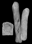 X-ray image of three types of bread (white on black) by Jim Wehtje, specialist in x-ray art and design images.