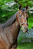 Remark, a dark bay/brown brindle Thoroughbred filly by Distorted Humor - Krisada, bred and owned by Darley and trained by Kiaran McLaughlin.
