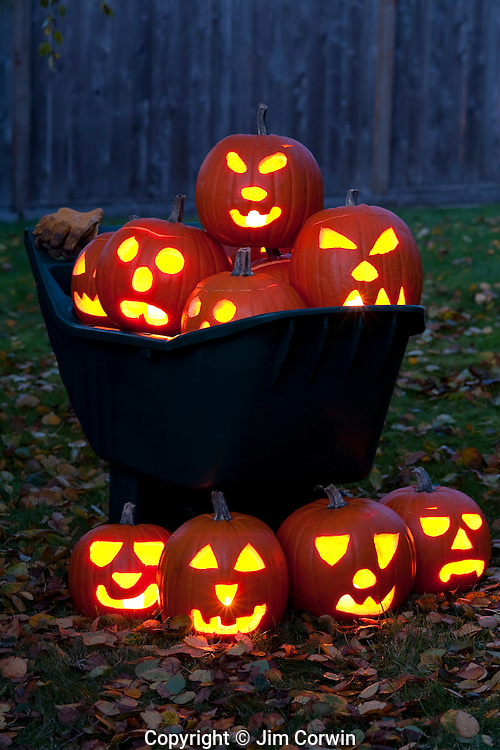 Halloween with carved pumpkins in a wheelbarrow twilight