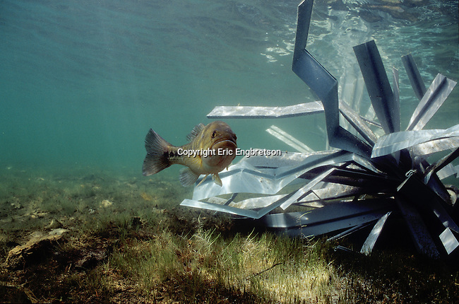 Fishiding-Structure-FHS-102.jpg