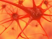 Biomedical illustration of brain neurons