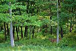 White-tailed deer, Long Island, New York
