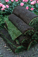 Sod grass ready to install in lawn