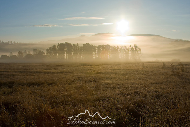 Idaho, Boundary County, Bonners Ferry. Sunrise over a fog bank and grove of trees in autumn. Lens flare removed from grass.