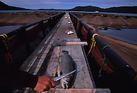 """Fish farm in Bay D'Espoir.  These fish are steelhead trout, but were marketed as Salmon.  There were 8 communities on Long Island Newfoundland and now there is only one left--Gaultois nwfld is a town you can only reach by boat--no cars. It used to be a thriving community of fishermen.  Now I'm in a boat with two of the surviving 8 fishermen in the last town on this island trying to eke a living out of lobstering.  Gaultois is bordered by Bay D'espoir (Bay of Hope) named for it's abundant fishing.  The locals now call this """"Bay Despair."""""""