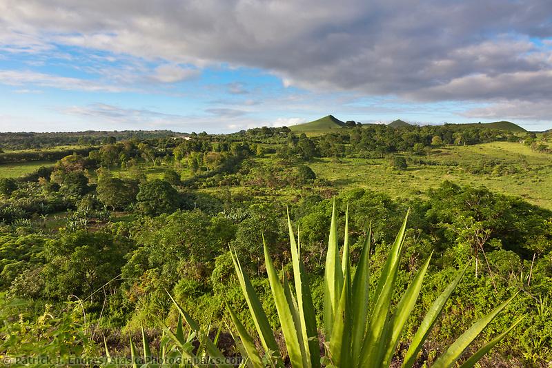 Highlands of Santa Cruz island, Galapagos Islands, Ecuador.