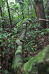 A tree limb curves into the dense foliage in the Amazon basin in Peru