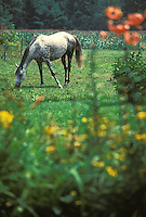 Animals, horse in pasture field.