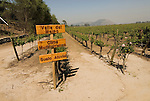 Chile Wine Country: Vineyards at Concha y Toro Winery, Vina Concha y Toro, near Santiago. .Photo #: ch459-33792..Photo copyright Lee Foster, 510-549-2202, www.fostertravel.com, lee@fostertravel.com.