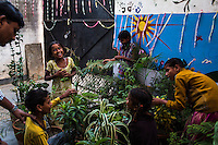 Children of women in prostitution tend to the pot of plant they are each responsible for in the Guria Non-Formal Education center in the middle of the Shivdaspur red light district, Varanasi, Uttar Pradesh, India on 20 November 2013. Guria uses many such activities to promote a caring and nurturing atmosphere with the children who grow up in brothels where they witness daily abuse.