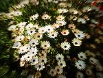 Lensbaby blur
