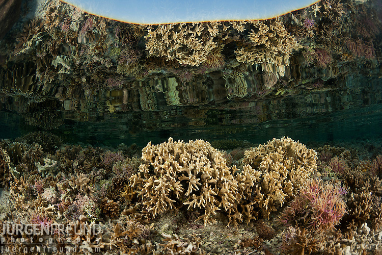 Coral reef in the shallows.