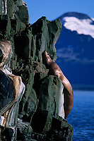Sea Lion on the rocky cliffs of the The Needle, a sea lion haulout, Prince William Sound, Alaska