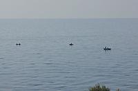 SEA_LOCATION_80248