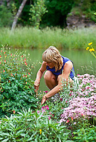 Young woman weeding and gardening in blooming summer garden, Missouri USA