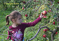 AT05-512z   Picking Apples, PRA