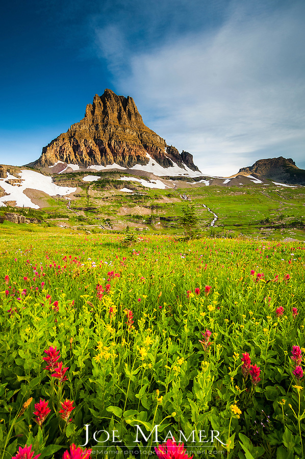 Mt. Reynolds with wildflowers at Logan Pass in Glacier National Park.