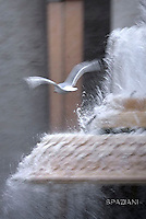 Seagull in St. Peter's Square at the Vatican during his weekly general audience of Pope Francis Wednesday.November 18, 2015.
