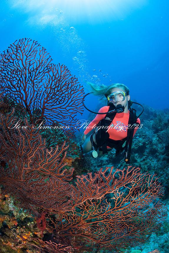 Alex Krasny<br /> French Cap Cay<br /> U.S. Virgin Islands