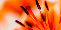 Soft colourful evocative details of flowers