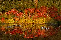 In Autumn: Fall in Flight