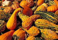 Assorted gourds and squash. Strasburg Pennsylvania USA Lancaster County.