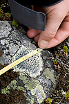 Measuring the diameter of the lichen to determine the age of the moraine for Climate Change studies.