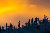 Sunset over winter boreal forest, interior, Alaska.