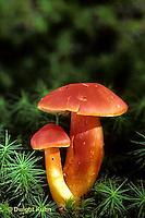 Mushrooms, Puffballs