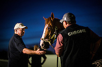 HALLANDALE BEACH, FL - JAN 27: California Chrome receives treats from Frank Taylor during a bath at Gulfstream Park Race Course on January 27, 2017 in Hallandale Beach, Florida. (Photo by Alex Evers/Eclipse Sportswire/Getty Images)
