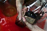 Udelnaya, Russia, 08/10/2012..Olessya Korsynskaya washing leeches after feeding them blood in the International Medical Leech Centre, the largest leech farm in the world.