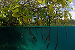 Blue water mangroves. North Raja Ampat, West Papua, Indonesia