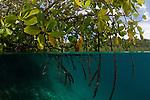 Blue water mangroves. North Raja Ampat, West Papua, Indonesia