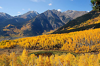 Aspen Grove in Fall Color