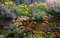 Flowers on a Stone Wall in Monhegan Island, Maine.