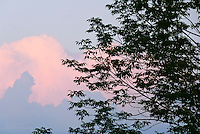Summer sunset with silhouette of leaves against a pink sky