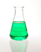 Chemical Beaker with chlorophyll solution