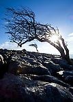 Tree, North Yorkshire Dales
