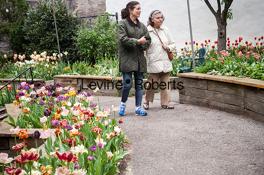 Visitors to the West Side Community Garden in New York enjoy the over 12,000 tulips in bloom during their Tulip Festival, seen on Sunday, April 30, 2017. The garden is currently celebrating its 43rd year. (© Richard B. Levine)