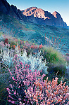 Fynbos on Waaihoek Peak, Hex River Mountains, Cape Province, South Africa. Zebasberg 1,899m in the background. Nikon F90, Sigma 24/2.8. Singh-Ray ND grad filter. Fuji RDP. 1994