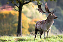 2012_10_17_CHATSWORTH_STAGS