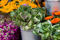 Bucket of cut flowers with flowering kale foliage plant