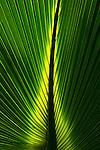 A detail of a leaf.