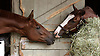 Electrified (left) and Kirkwood Ranger (right), Todd Pletcher trainees, at Saratoga's Oklahoma track in October 2004.