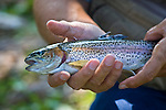 A man holds a rainbow trout.