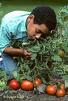1R14-003a   Eastern Box Turtle - being watched by boy in garden near tomato plants - Terrapene carolina