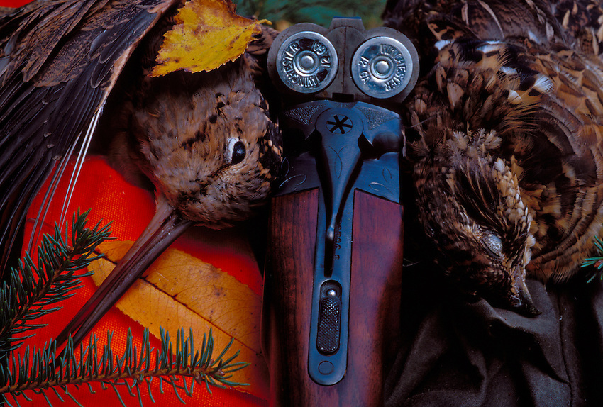 A WOODCOCK (SCOLOPAX RUSTICOLA) AND A RUFFED GROUSE (BONASA UMBELLUS) WITH A SIDE-BY-SIDE TWELVE GAUGE SHOTGUN AND FALL FOLIAGE NEAR MARQUETTE, MICHIGAN.
